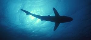 SharkWeekend